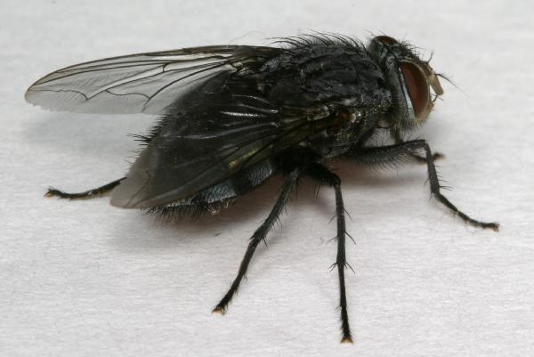 Prevention These insects have proven to be such a nuisance in summer months that special hiking gear has been developed to combat them. Research also shows that black flies are more attracted to dark colors than to light colors; hikers who dress accordingly are less likely to be bothered.