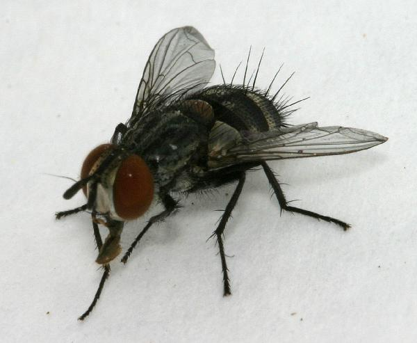 how to stop flies in backyard